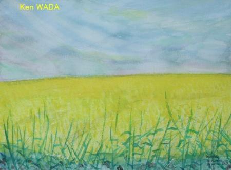 Les champs de colza 5