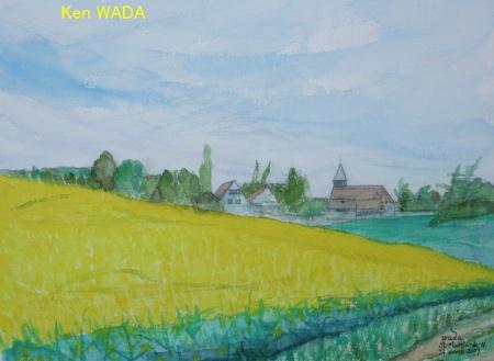 Les champs de colza 7