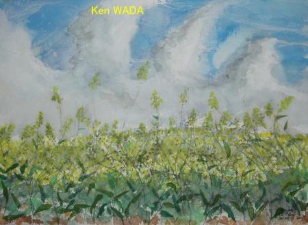 Les champs de colza 9