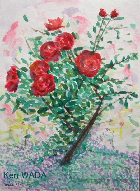 Roses dans le jardin