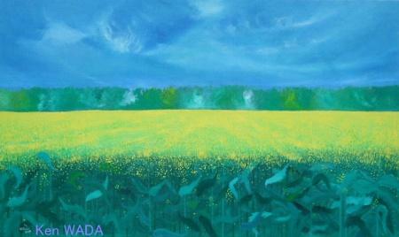 Les champs de colza 8